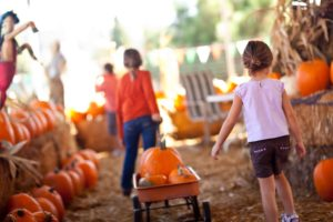Pumpkin patch in fall